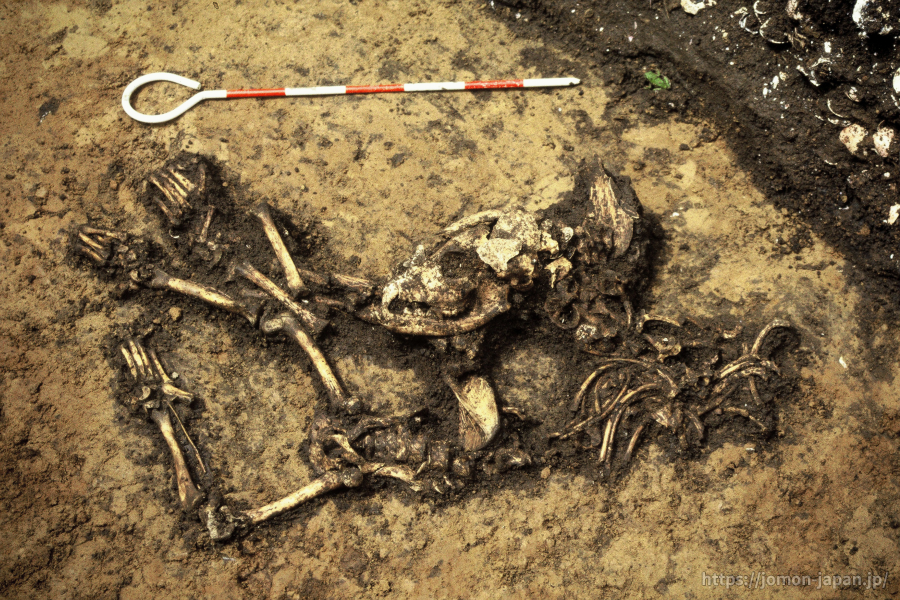 二ツ森貝塚 埋葬された幼犬