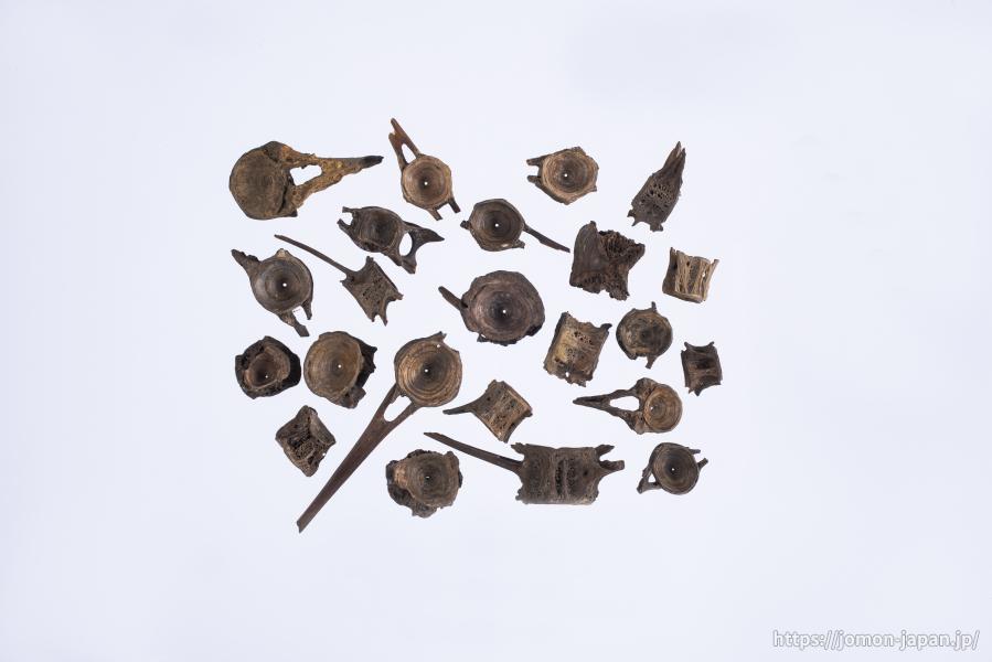 三内丸山遺跡 ヒラメの椎骨
