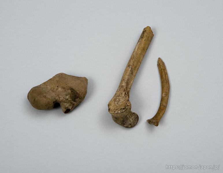 三内丸山遺跡 鳥骨 白鳥(左)・ガン(右)