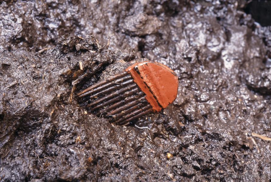 是川石器時代遺跡 漆塗り櫛出土状況