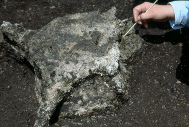 Excavated whale vertebra, Ofune Site