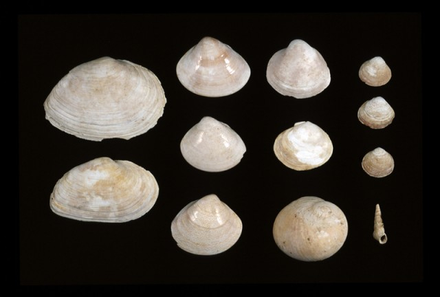 Excavated shells