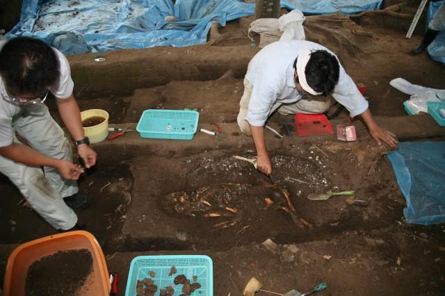 Work to find human bones
