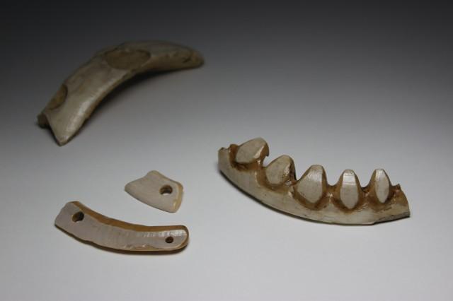 Boar tusk ornaments