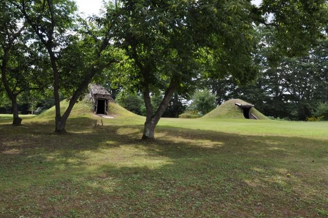 クリの木と土屋根建物